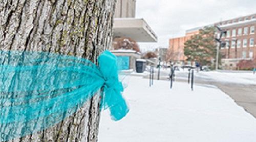 teal-ribbon tree